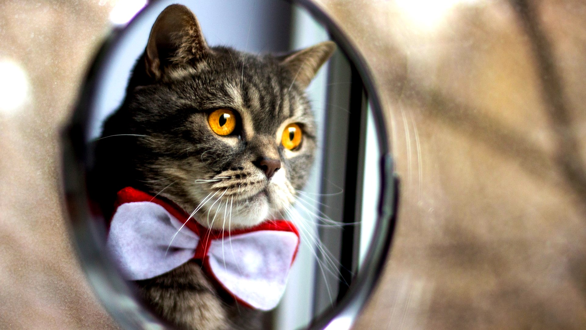 www_getbg_net_animals___cats_fashionable_cat_looking_in_the_mirror_097134_
