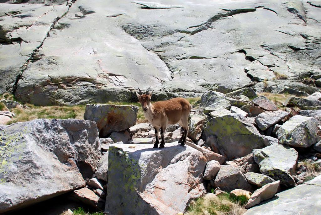 ... y bajo el cancho de la cabra estaba el tesoro (Foto:Jimber)