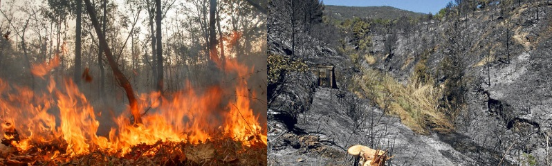 04-incendios-forestales