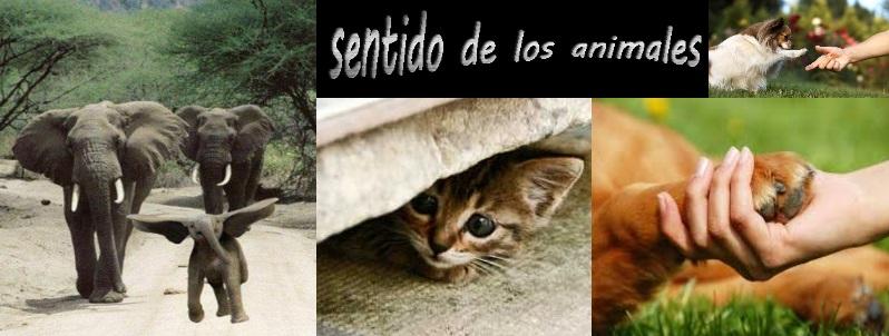 01-los-sentidos-animales-en-ayuda