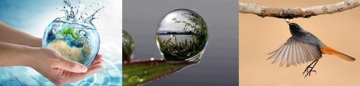 03-agua-abundante-gota-y-pajaro