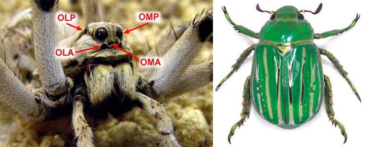 03-tarantula-y-escarabajo
