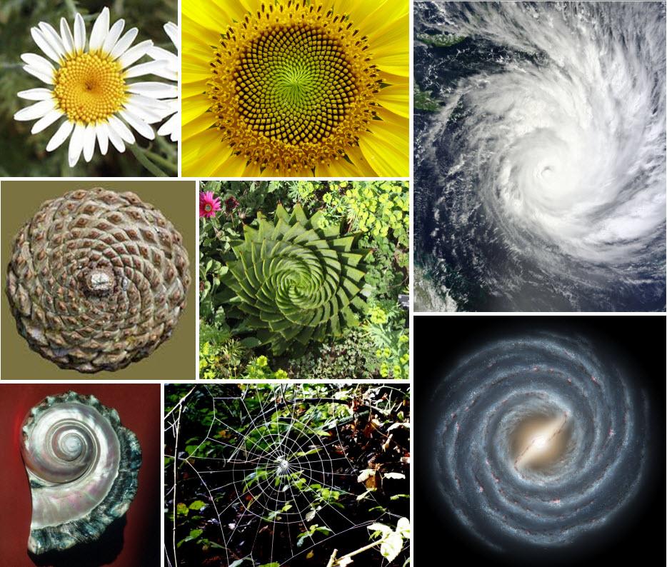 00-espirales-naturaleza