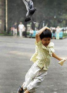 04-ataque-de-palomas-enemigas