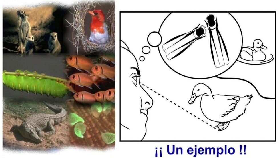 01-biomimetica-inicial
