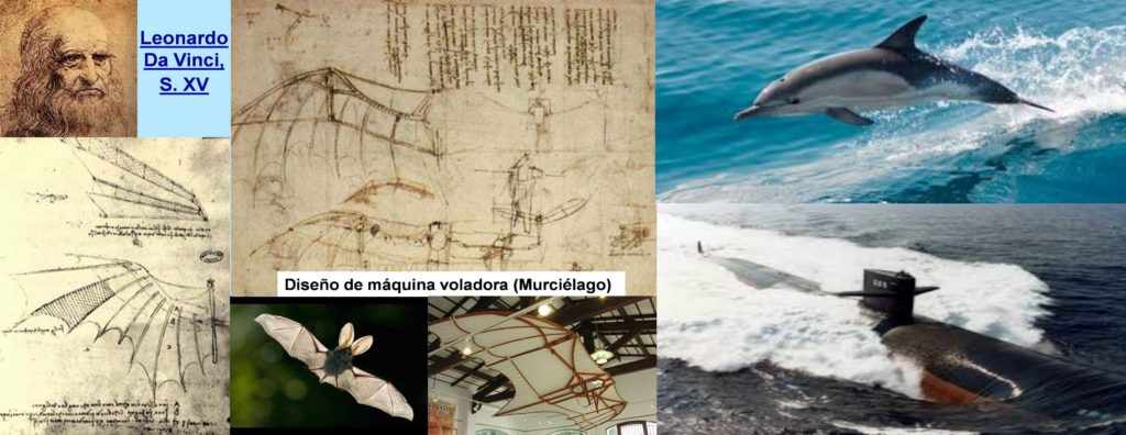 01-leonardo-murcielago-delfin